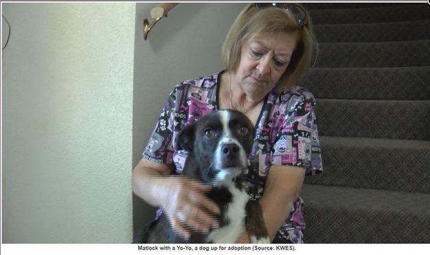 Click her to Read Channel 9 News Article about Candace and the Dogs